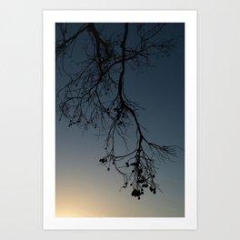 branch silhouette Art Print