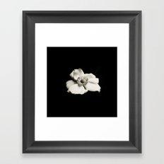 Japanese Anemone  Framed Art Print