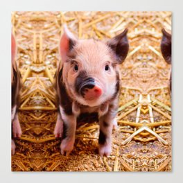 Cute Baby Piglet Farm Animals Babies Canvas Print