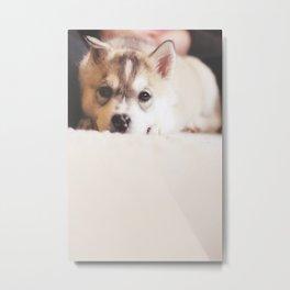 "siberian husky puppy - ""nova"" Metal Print"