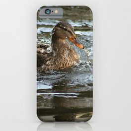 Mallard Duck Swimming iPhone Case