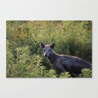 coyote Canvas Prints featuring coyote  by Alexpetrou