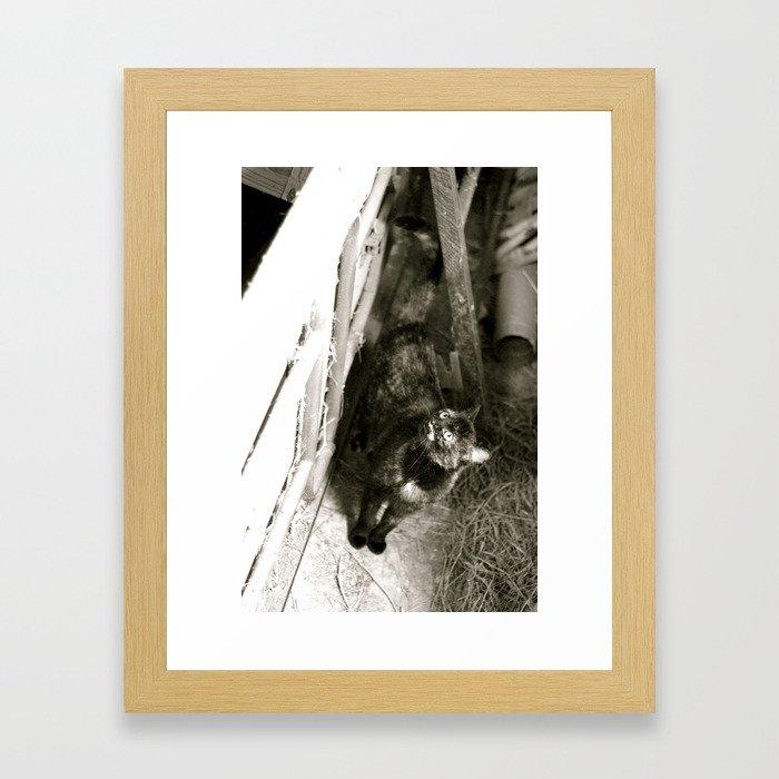 Barn Cat Framed Art Print