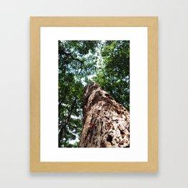 Forest elder Framed Art Print