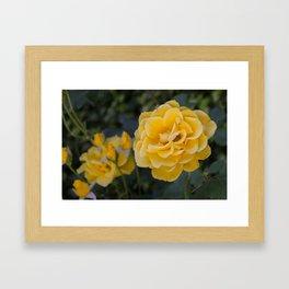 Rose Garden Six (with bonus friend) Framed Art Print