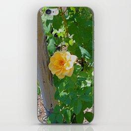 Rose In The Vine iPhone Skin