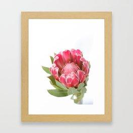 Dark Pink Protea Framed Art Print