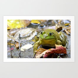 Bull frog in his natural habitat  Art Print