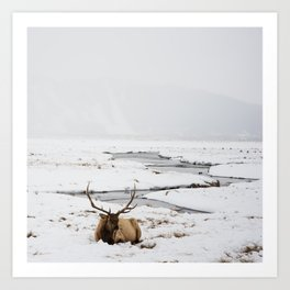 Elk Resting in the Snow Art Print