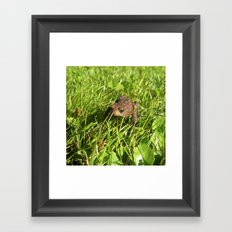 tree frog macro II Framed Art Print
