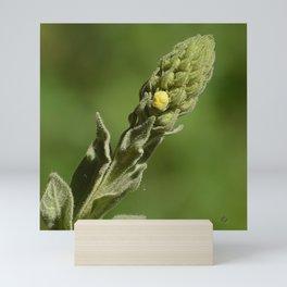 Sparkling Verbascum Thapsus Mullein Plant Mini Art Print