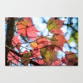 Fall Upshot Canvas Print