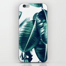 Ficus Elastica #1 iPhone Skin