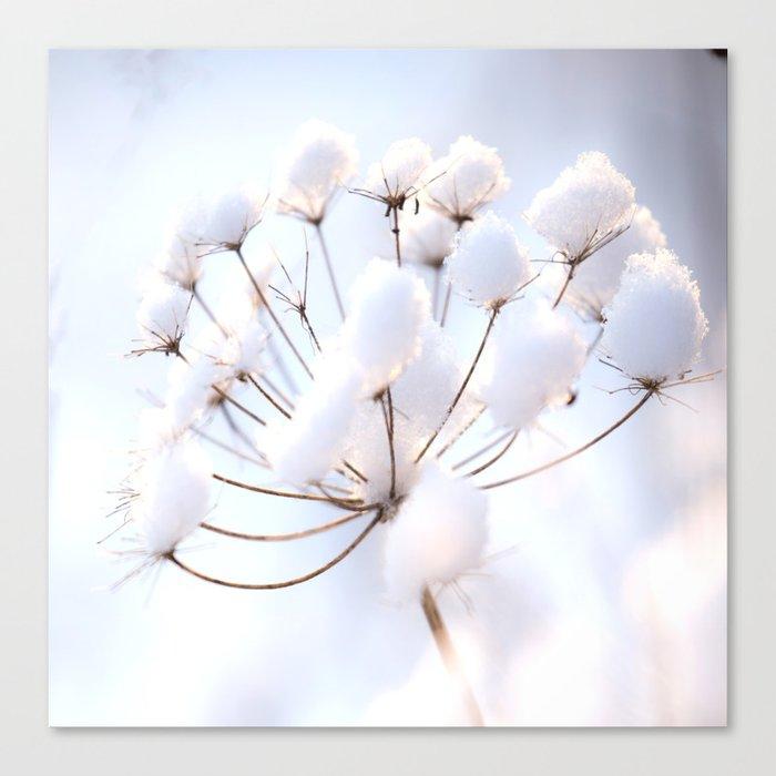 Snow covered dryflower Canvas Print