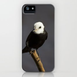 Birds from Pantanal Freirinha iPhone Case