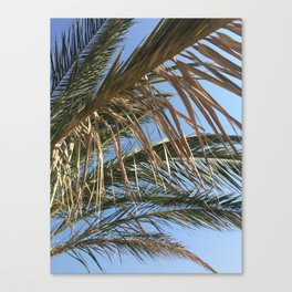 Palm Tree - Summer Holiday Photography Nature Sky Beach Canvas Print