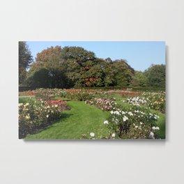 Rose Garden At Greenwich Park Metal Print