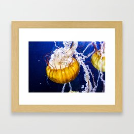 California Jellies Framed Art Print