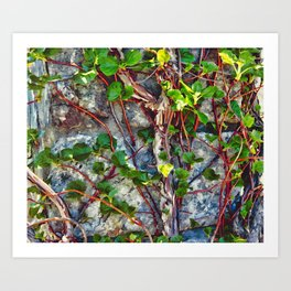 Climbing Vines - Nature's Art Work Art Print