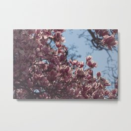 Pink Spring in Bloom Metal Print