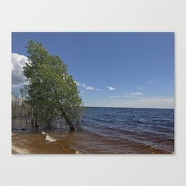 Tree in the lake Canvas Print
