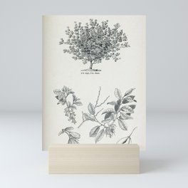 Tree Four winged seeded Halesia or Snowdrop tree2 Mini Art Print