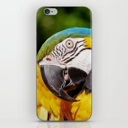 Yellow, Blue & Green Parrot iPhone Skin