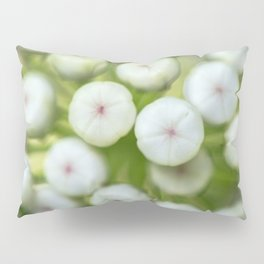 Wht-flowered Milkweed Pillow Sham