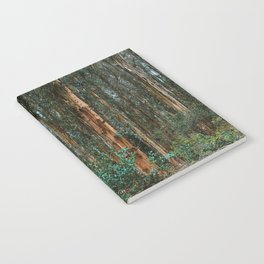 Eucalyptus Trees Near Berkeley California Notebook