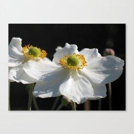 White on Black - Anemone Flowers Canvas Print