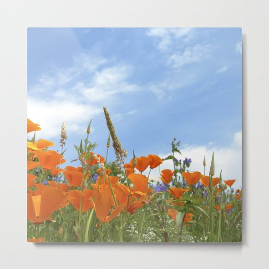 california poppy VII Metal Print