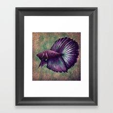 Betta Fish Framed Art Print