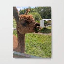 Artemis Alpaca Metal Print