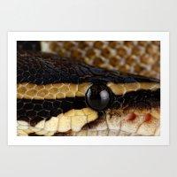 monty python Art Prints featuring Python by Mark Johnson