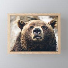 Grizzly Bear Framed Mini Art Print