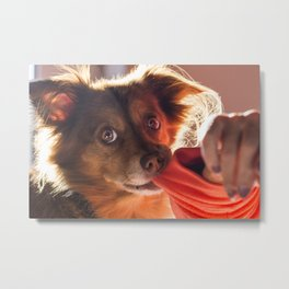 Dog playing with his owner Metal Print