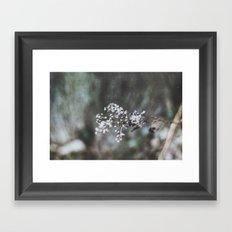Cold Flower Framed Art Print