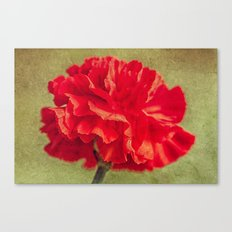 Red Carnation. Canvas Print