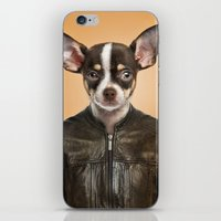 chihuahua iPhone & iPod Skins featuring Chihuahua  by Life on White Creative