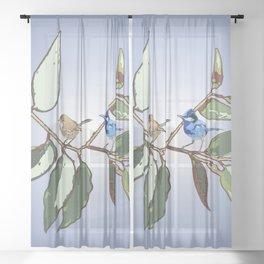 Splendid Fairy-wren Malurus splendens  Sheer Curtain
