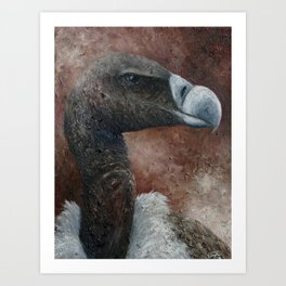 Indian Vulture (Gyps indicus) Art Print