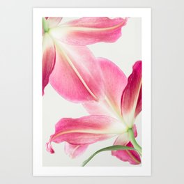 Pink Petals - Flower Photography, Botanical Art Print