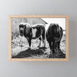 Shetland Ponies Framed Mini Art Print
