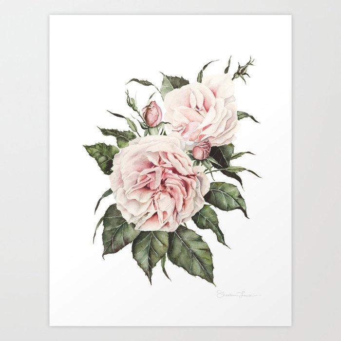 Pink Garden Roses Watercolor Kunstdrucke