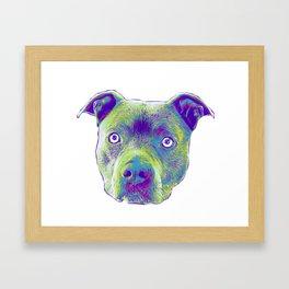 Blue Pitbull dog Framed Art Print