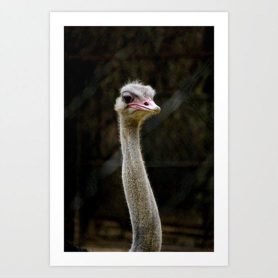 Sauve Ostrich Art Print