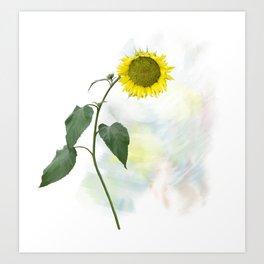 Sunflower blooming, watercolor painting Art Print