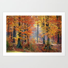 Colorful Autumn Fall Forest Art Print