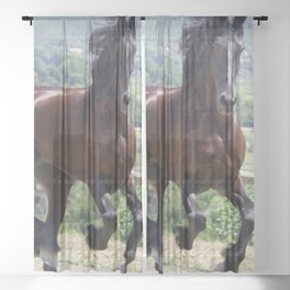 Majestic Brown Horse Galloping Ultra HD Sheer Curtain