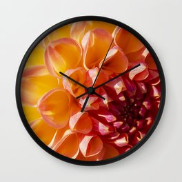 A Fiery colored Dahlia (Asteraceae) shines in the morning sun Wall Clock